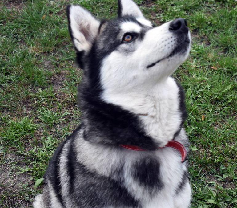 YUKI adopcja listopad 2018